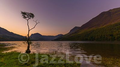 Buttermere lone tree at dawn.