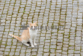 A cat with it's ears back on a cobblestone road