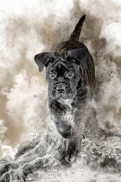 2020-Art-Digital-Alain-Thimmesch-Chien-20