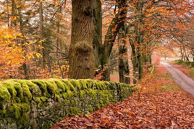 Autumnal country land in the Peak District