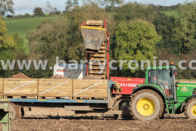 21st October, 2019. The Spillanes harvesting rooster potatoes on 75 acres of land in Gibbstown, County Meath. With a yield of...