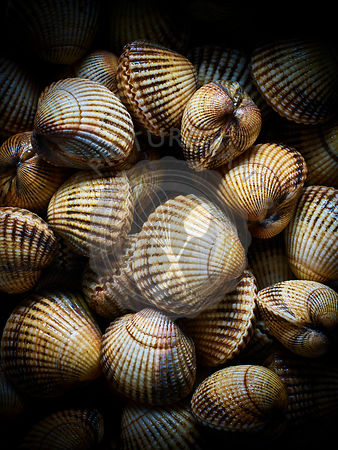 A close up photograph of clams against a black background