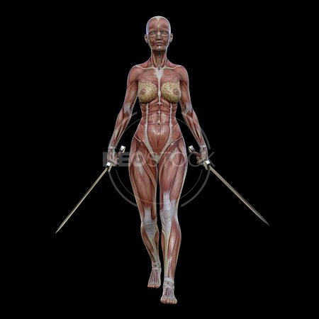 cg-body-pack-female-muscle-map-neostock-13