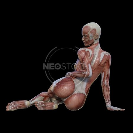 cg-body-pack-female-muscle-map-neostock-20