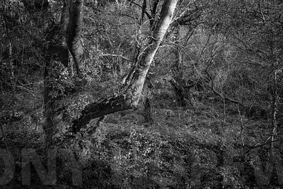 Holloways_and_tramwaysL1000769