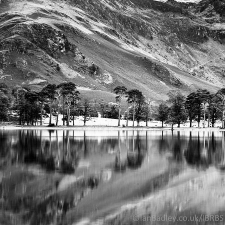 Reflections in Lake Buttermere of pines, Lake district, England