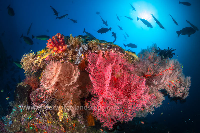 Magic Mountain underwater reefscape in Raja Ampat