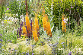 The Drought Tolerant Garden at the RHS Hampton Court Palace Garden Festival 2019. Designers: David Ward and Beth Chatto.  Ere...