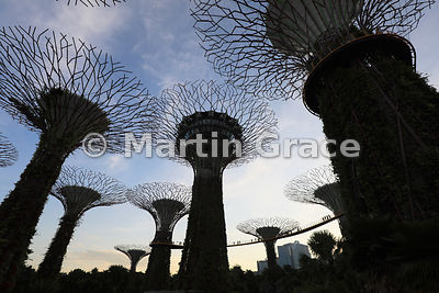 Supertrees at dusk, Gardens By The Bay, Singapore, Southeast Asia