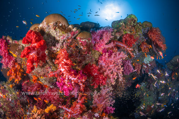 Underwater colors explosion