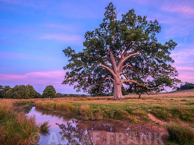 Single tree in a meadow