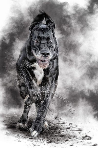 2020-Art-Digital-Alain-Thimmesch-Chien-7