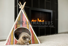 husky puppy sleeping in little stripped tent next to fireplace