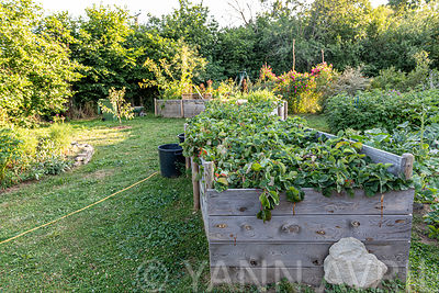 Strawberries planted in raised vegetable boxes in summer, Lot, France ∞ Fraisier plantés dans des bacs potagers surélevés, Fr...