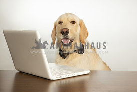 Happy dog wearing bow tie and working on computer isolated on white background