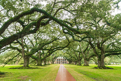 Oak Alley,ancienne plantation coloniale en Louisiane