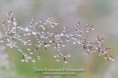 Prints & Stock Image - Dew covered grass.