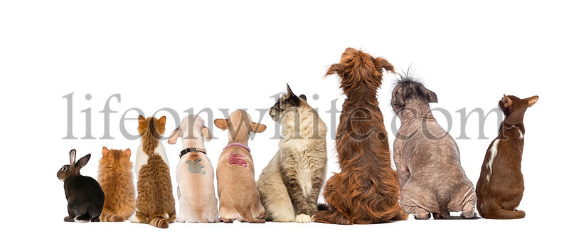 Rear view of a group of pets, Dogs, cats, rabbit, sitting, isolated on white