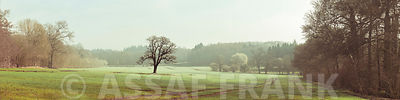 Panorama picture of beautiful grassland with trees