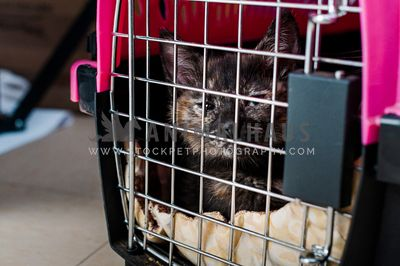 A disgruntled looking cat in a pink and black crate