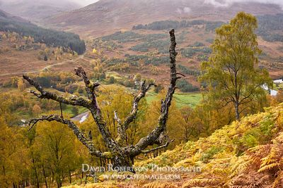 Prints & Stock Image - Dead tree on hillside above Glen Lyon in autumn, Perth and Kinross, Scotland