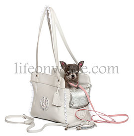 Chihuahua in a leather bag in front of white background