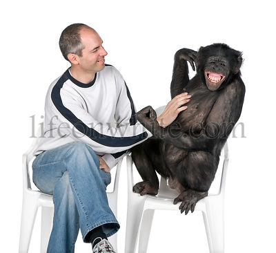 interplay between human and monkey
