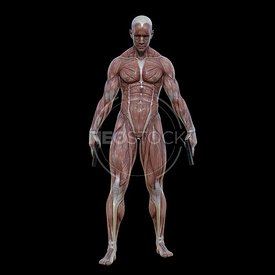 cg-body-pack-male-muscle-map-neostock-14