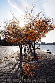 Autumn at Islands Brygge