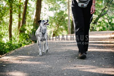 Dog walking with owner on a path through the woods