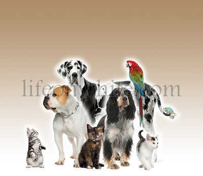 Group of pets standing in front of white and brown background, studio shot