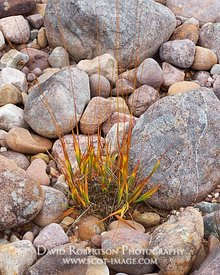 Image - Grass on stony beach of Loch Maree, Wester Ross, Scotland