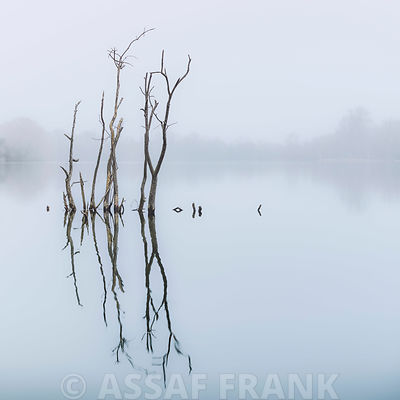 Braches in lake, reflection