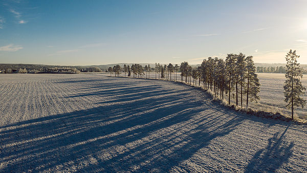 Long shadows from trees on a frosty field