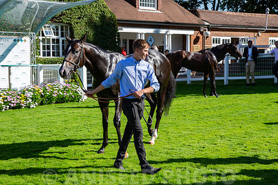 Aniseed_Photo_-_EN_Raceday_2019-187