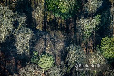 RUSLAND 02B - Aerial view of trees in the Rusland Valley