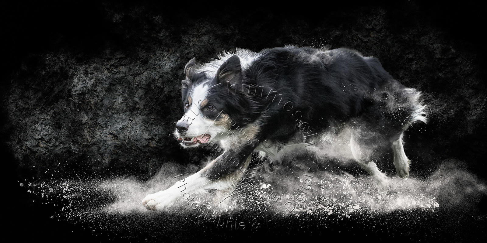 Art-Digital-Alain-Thimmesch-Chien-970