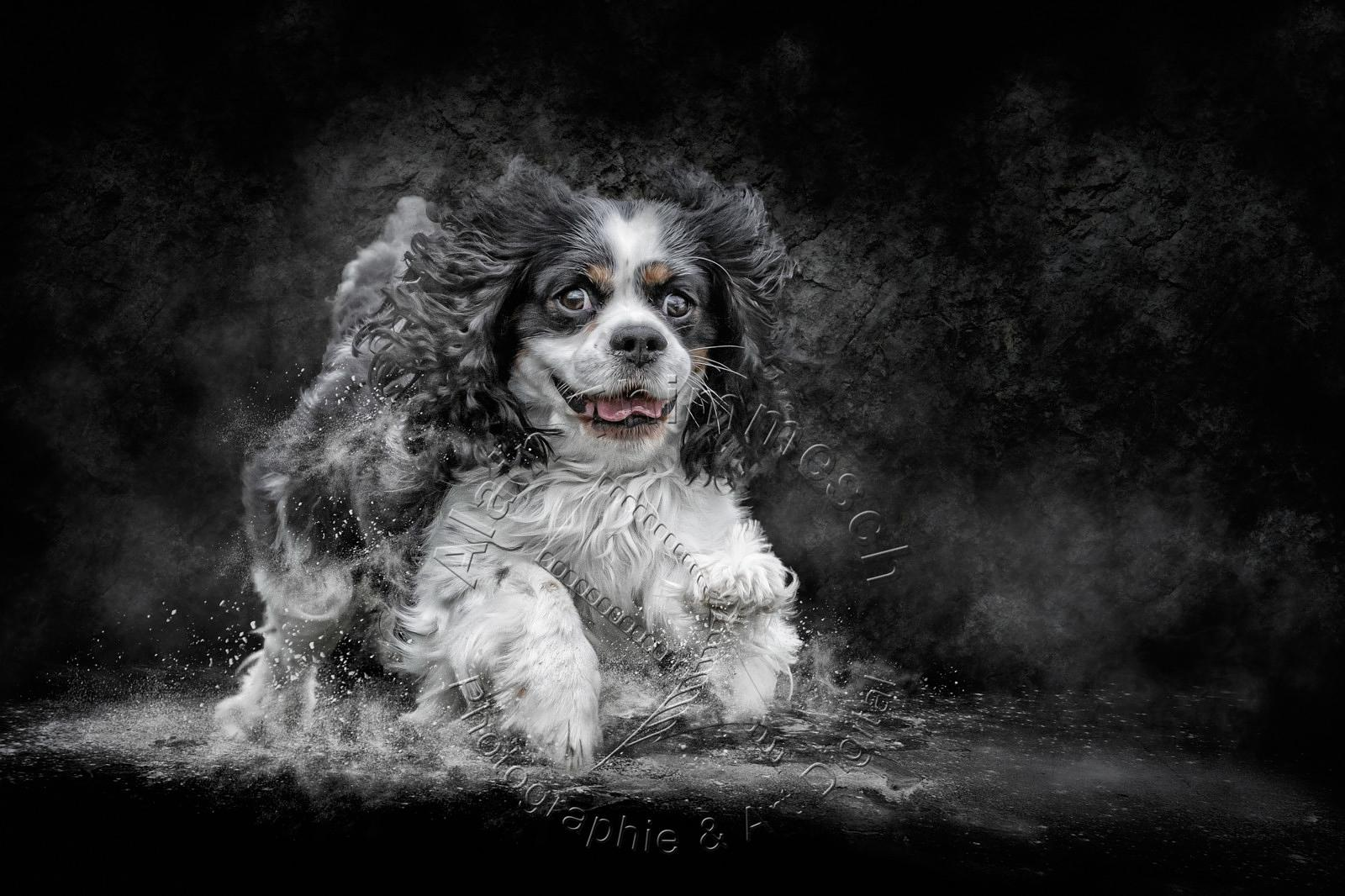 2020-Art-Digital-Alain-Thimmesch-Chien-92