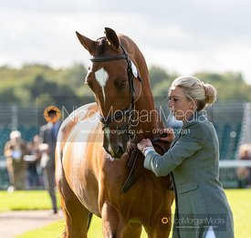 Ginny Howe and UNDALGO DE WINDSOR at the trot up, Land Rover Burghley Horse Trials 2019