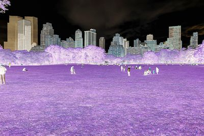 NEW YORK - PURPLE