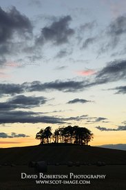 Image - Roundel of trees near Aberlemno, Angus, Scotland
