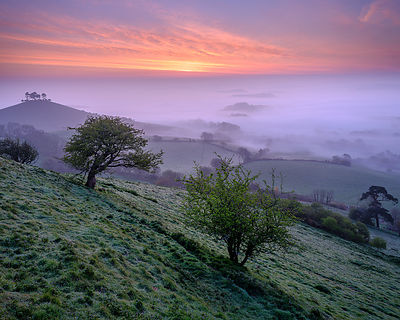 Misty dawn twilight over the distinctive pine topped Colmer's Hill near Bridport, Dorset, UK
