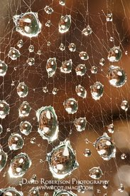 Image - Water droplets on spiders web.