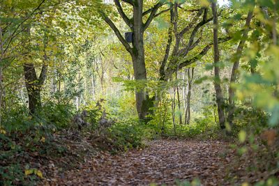 Autumn in Shropshire woodland