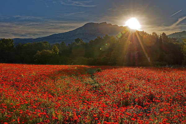 Dawn is breaking: sunrise over the top of Sainte-Victoire lighting up a field of poppies.