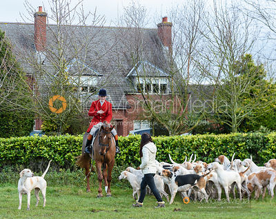 Ollie Finnegan and hounds at the meet. The Quorn Hunt at Barrowcliffe 6/12