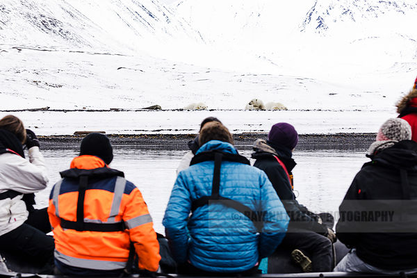 Tourists in a zodiac observing polar bears on the beach in Spitsbergen, Norway