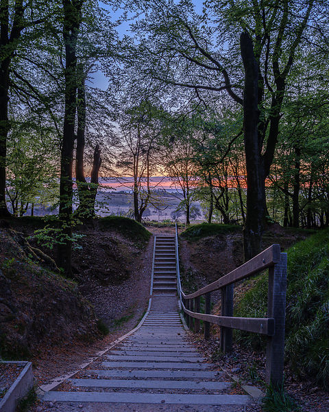 Twilight beyond trees with steps leading to heathland, Woodbury Castle, near Exmouth, Devon, UK.