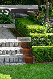 Buxus sempervirens (Buis commun), Paysagiste : Charlie Albone, CFS, Angleterre