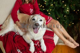 Young girl sitting on a chair with a dog by a Christmas tree